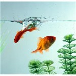 fish dream interpretation