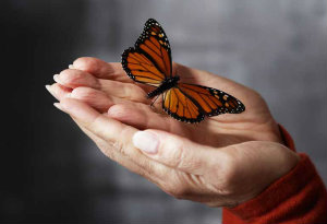 Hands Holding Butterfly --- Image by © Royalty-Free/Corbis