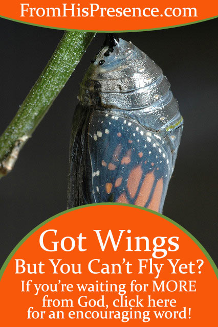 Got-Wings-But-You-Can't-Fly-Yet