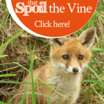 Special Grace to Drive Out the Little Foxes that Spoil the Vine | by Jamie Rohrbaugh | FromHisPresence.com
